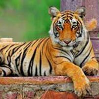 4 Nights / 5 Days  Jaipur (2) – Ranthambore (2) Tour
