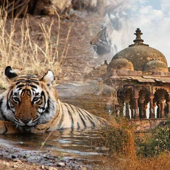 Jaipur (2) - Ranthambore (1) - Udaipur (2) - Mount Abu (1) - Jodhpur (1) – 7 NIGHTS / 8 DAYS Tour