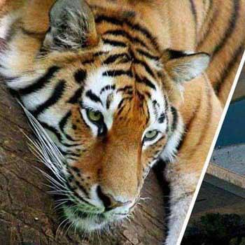 Taj and Wildlife Tour