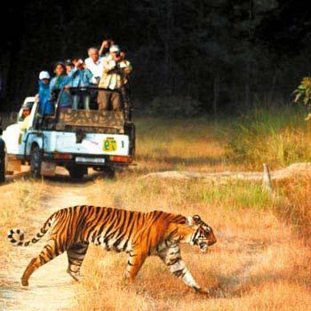 Corbett Tiger Safari  Tour