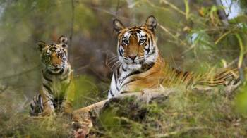 Taj Safari Tour in India 11 Days Tour
