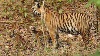 3 Days Kanha Tour Package Tour