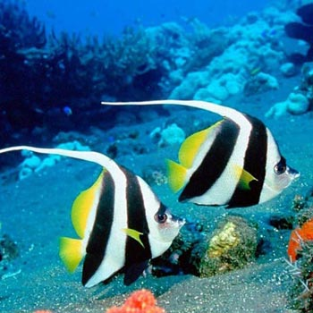 4 Nights 5 Days Andaman Special Honeymoon Package