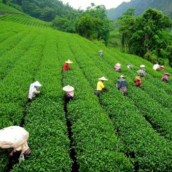Darjeeling Mirik 4 days – 3 Night Package