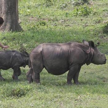 Wild Beauty Of Assam Tour