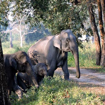 Wild Beauty Of Assam Tour