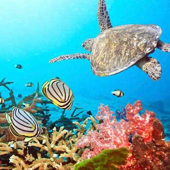 Backpacking Tour In Andaman