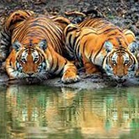 South India Tour with Wildlife