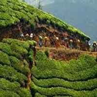 Darjeeling Tour 07 Days