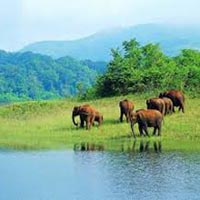 Munnar and Thekkady 3 Star Package for 4 days Tour