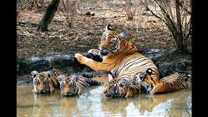 Bandhavgarh National Park Tour