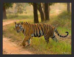 Pench National Park Tour
