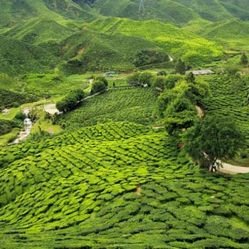 Gangtok And Darjeeling Package