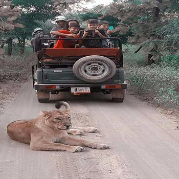 Gir National Park Tour Package