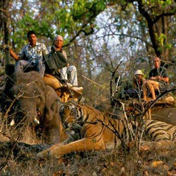 Pench National Park Tour Package