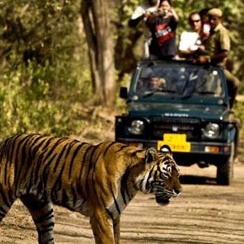 Barnawapara Wildlife Sanctuary Tour
