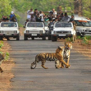 Kaziranga Wildlife Sanctuary Tour