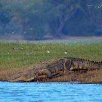 Kaziranga Wildlife Sanctuary Tour