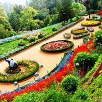 Botanical Garden , Ooty