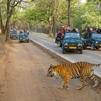 Kanha National Park 2
