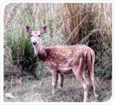 Kanha Kisli National Park Tour Package