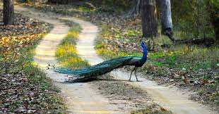 Kanha Jangale Safari Park Tour Package
