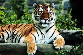 Kanha National Safari package (M.P)