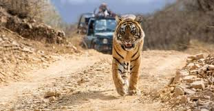 Kanha Wildlife Sanctuary M.P. Tour