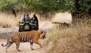 Umred Karhandla Wildlife Sanctuary Tour Package From Nagpur