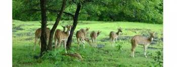 Barnawapara Wildlife Sanctuary Tour Package