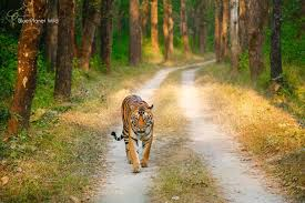 Kanha Wildlife Sanctuary Tour