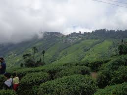Bagdogra  with Darjeeling  Tour