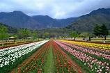 Srinagar,Pahalgam,Gulmarg,Sonamarg,Srinagar Tour Package