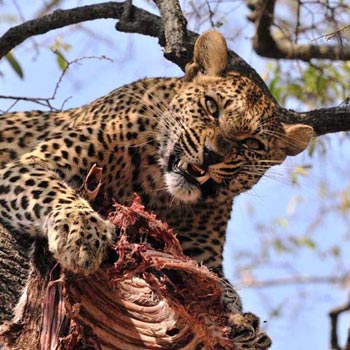 Best of Kenya Wildlife Safari Tour