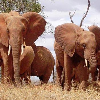 Masai Mara   Lake Naivasha and Amboseli - Kenya Tours