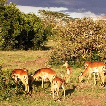 Uganda Safari Tour