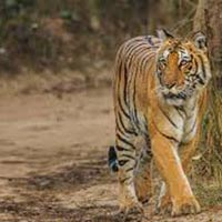 10 Nights / 11 Days Corbett, Munsiyari, Nainital Tour