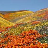 Valley Of Flower – Hemkunt Tour