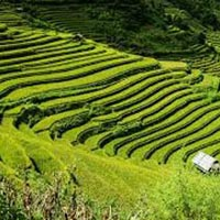 Sikkim - Darjeeling Tour (Duration: 7 Days)