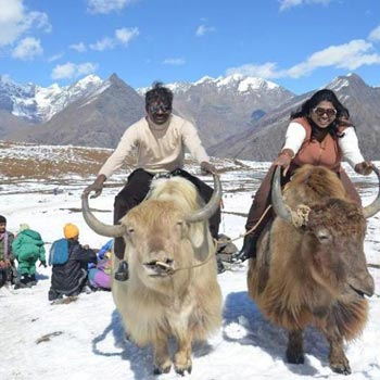 Delhi -Manali Honeymoon Tour