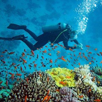 Discover Andaman  Tour