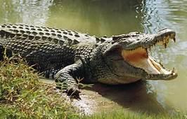 Crocodile Trip