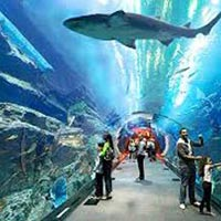 Dazzling Dubai (6 Nights / 7 Days) Tour