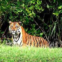 Royal Sunderban With Exotic Kolkata Tour