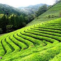 Zuluk Silk Route Package Tour