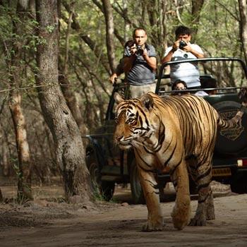 Rajasthan Wildlife Package- 5 Nights/ 6 Days Tour