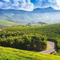 Ooty - Kodaikanal- Munnar - Thekkady Tour