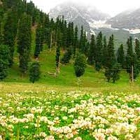 Blissful Kashmir Tour