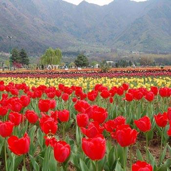 Summer Kashmir  Tour  Ex-Srinagar – 6 Nights 7 Days