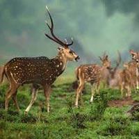 Maharashtra Wildlife Tour